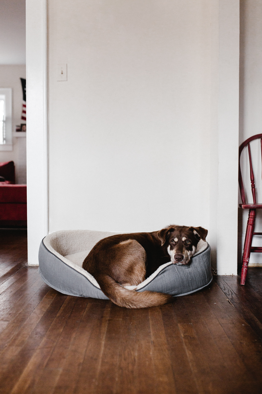 Il Cane In Casa